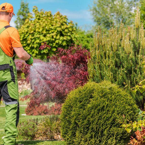 Cura del giardino suzzara mantova